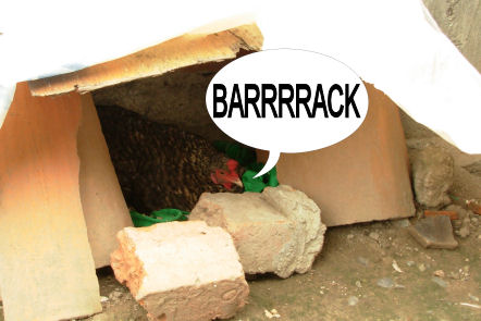 chicken_barrack01.jpg